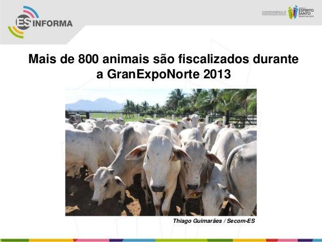 Mais de 800 animais são fiscalizados durantea GranExpoNorte 2013Thiago Guimarães / Secom-ES