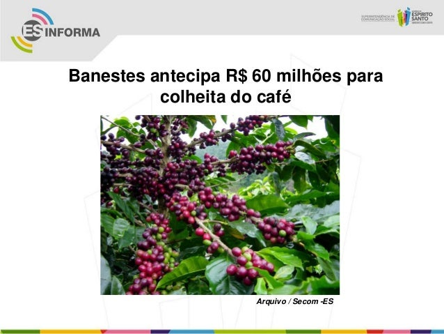 Banestes antecipa R$ 60 milhões para          colheita do café                     Arquivo / Secom -ES