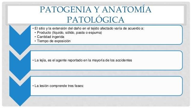 PATOGENIA Y ANATOMÍA PATOLÓGICA • El sitio y la extensión del daño en el tejido afectado varía de acuerdo a: • Producto (l...