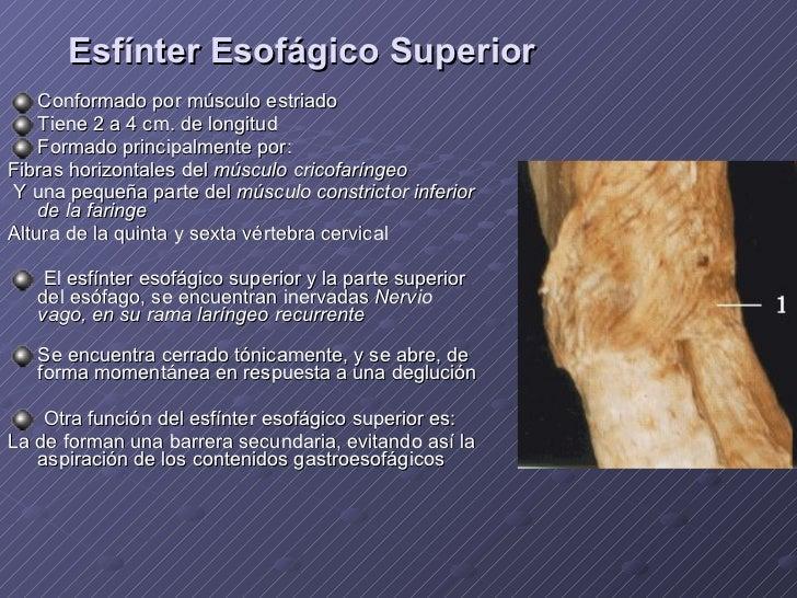 Esofago 2010 anatomia y tecnica