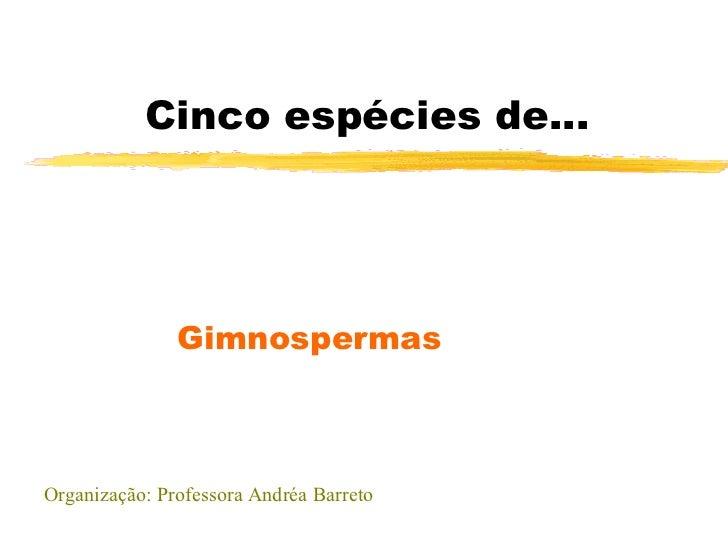 Cinco espécies de... Gimnospermas Organização: Professora Andréa Barreto