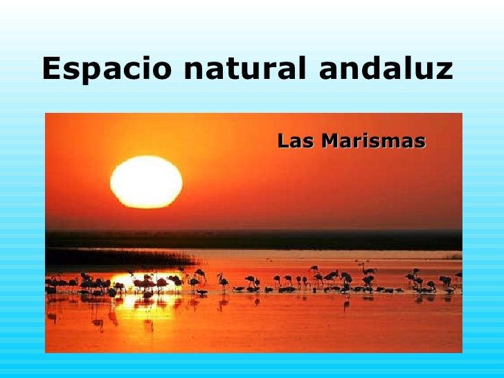 Espacio natural andaluz Las Marismas