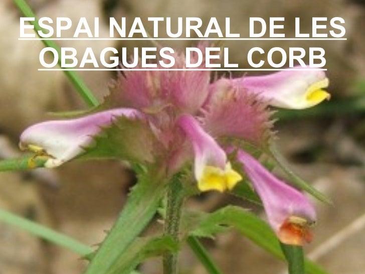 ESPAI NATURAL DE LES OBAGUES DEL CORB