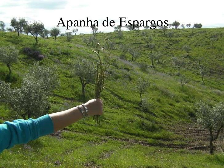 Apanha de Espargos<br />