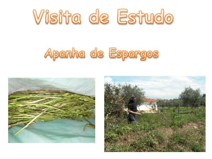 Visita de Estudo<br />Apanha de Espargos<br />