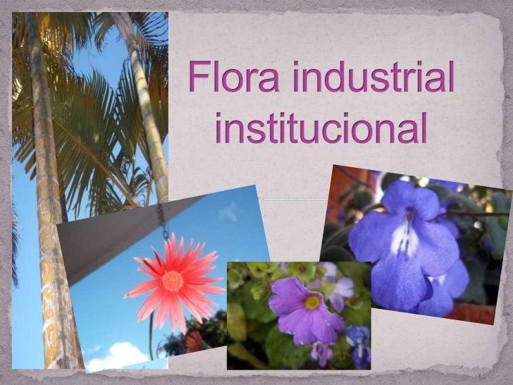 Flora industrial institucional<br />