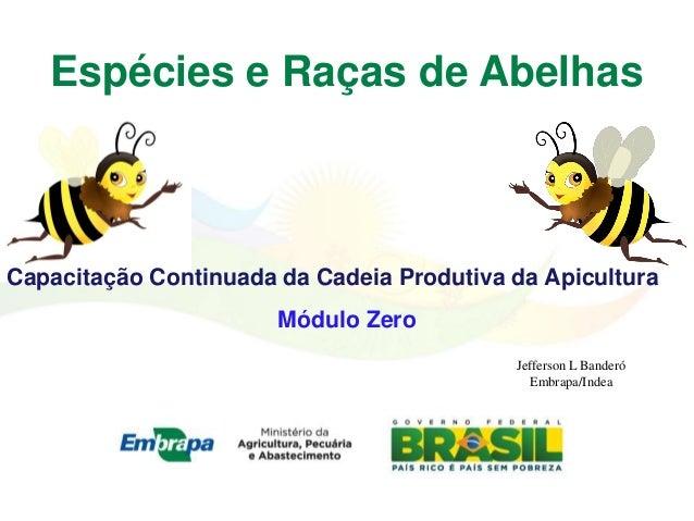 Espécies e Raças de AbelhasCapacitação Continuada da Cadeia Produtiva da Apicultura                       Módulo Zero     ...