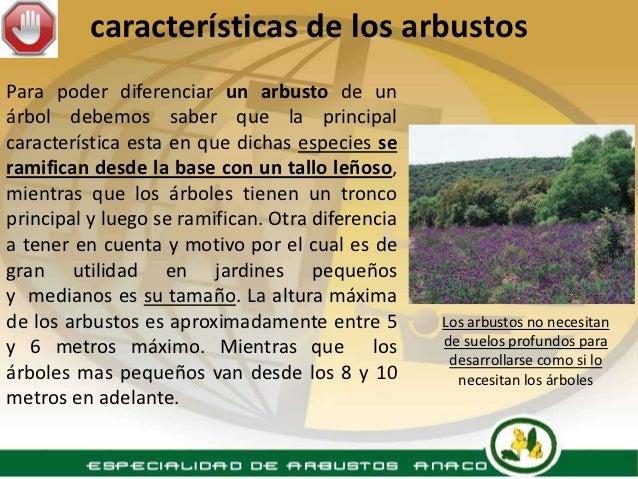 Especialidad arbustos - Arbustos nombres ...
