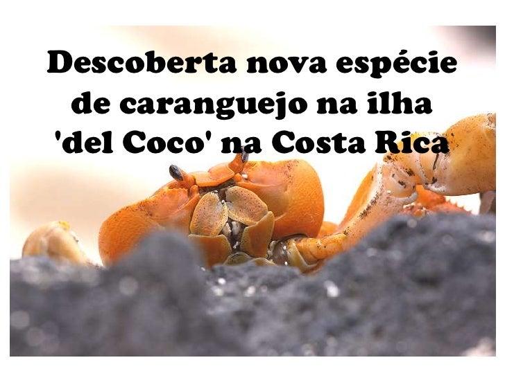Descoberta nova espécie de caranguejo na ilhadel Coco na Costa Rica
