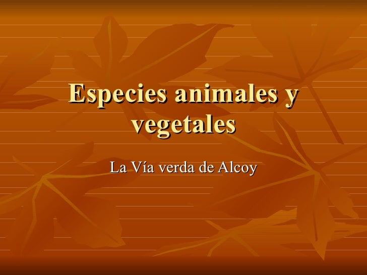 Especies animales y vegetales La Vía verda de Alcoy