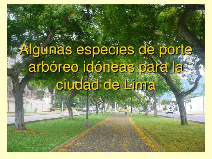 Algunas especies de porte arbóreo idóneas para la     ciudad de Lima