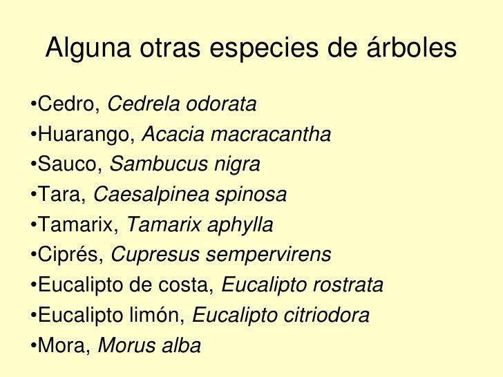 Especies arb reas id neas para lima for Lista de arboles perennes