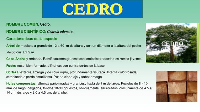 Especies de maderas en el per for Tipos de arboles y sus caracteristicas