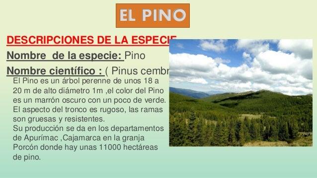 Especies de maderas en el per - Maderas el pino ...