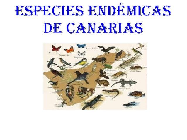 ESPECIES ENDÉMICAS DE CANARIAS