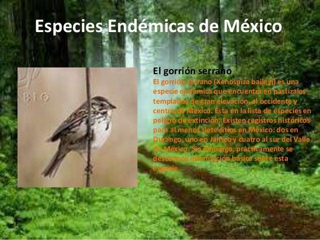 Especies end micas de m xico for Arboles con sus nombres y caracteristicas