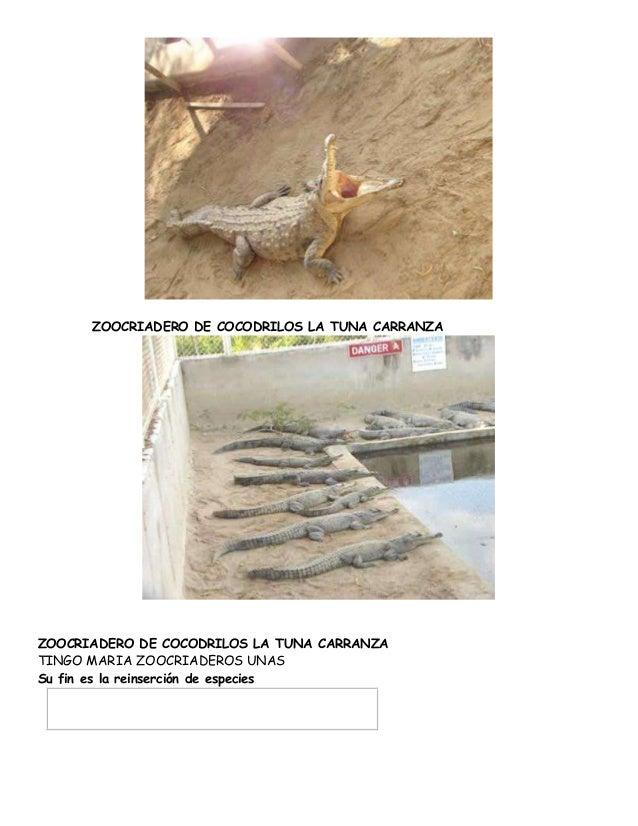 ZOOCRIADERO DE COCODRILOS LA TUNA CARRANZA  ZOOCRIADERO DE COCODRILOS LA TUNA CARRANZA  TINGO MARIA ZOOCRIADEROS UNAS  Su ...
