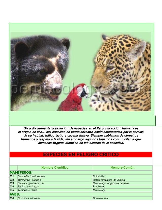 Día a día aumenta la extinción de especies en el Perú y la acción humana es  el origen de ello... 301 especies de fauna si...