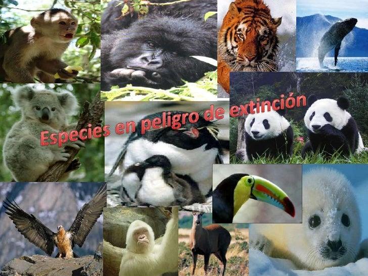 Especies en peligro de extinción<br />
