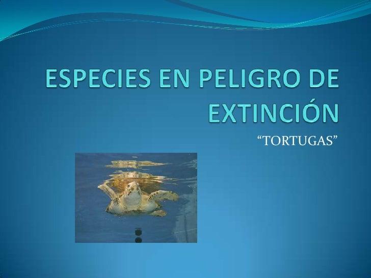 """ESPECIES EN PELIGRO DE EXTINCIÓN<br />""""TORTUGAS""""<br />"""