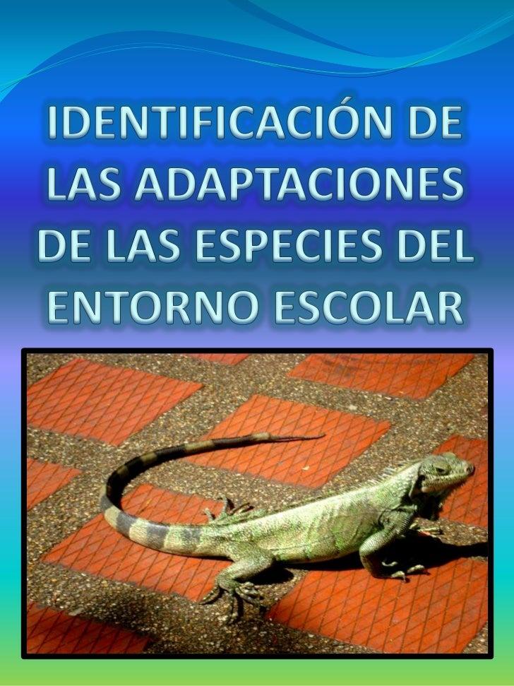 IDENTIFICACIÓN DE LAS ADAPTACIONES DE LAS ESPECIES DEL ENTORNO ESCOLAR<br />