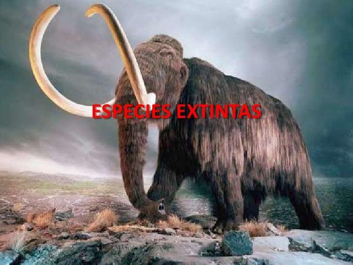 ESPECIES EXTINTAS<br />