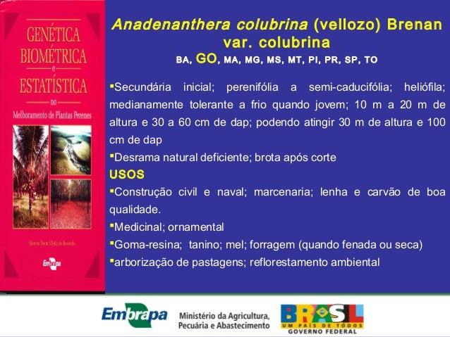 Anadenanthera colubrina (vellozo) Brenanvar. colubrinaBA, GO, MA, MG, MS, MT, PI, PR, SP, TOSecundária inicial; perenifól...