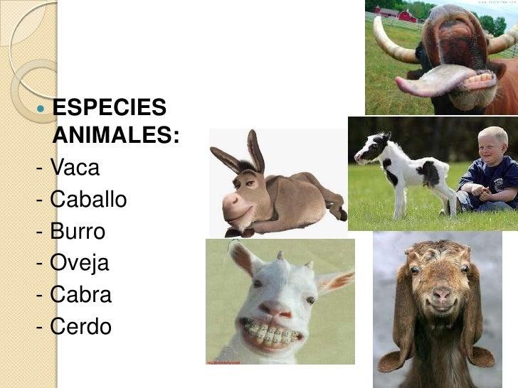  ESPECIES  ANIMALES:- Vaca- Caballo- Burro- Oveja- Cabra- Cerdo
