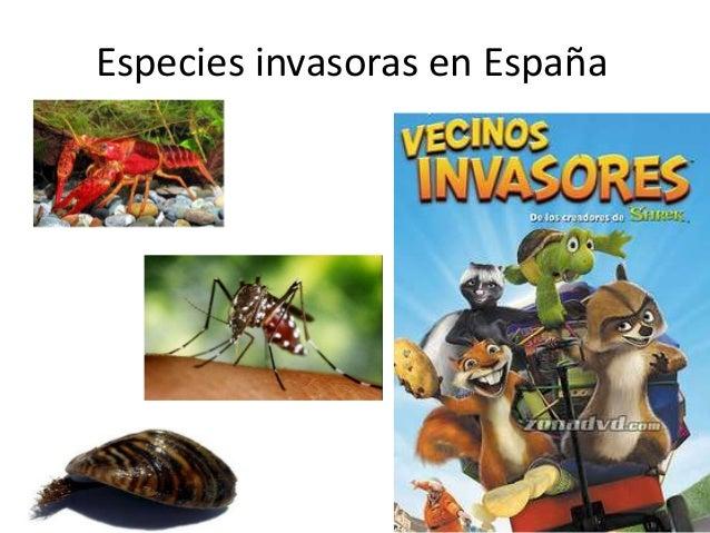 Especies invasoras en España