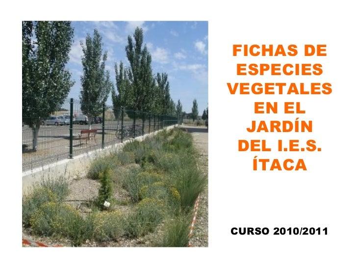 FICHAS DE ESPECIES VEGETALES EN EL JARDÍN DEL I.E.S. ÍTACA CURSO 2010/2011
