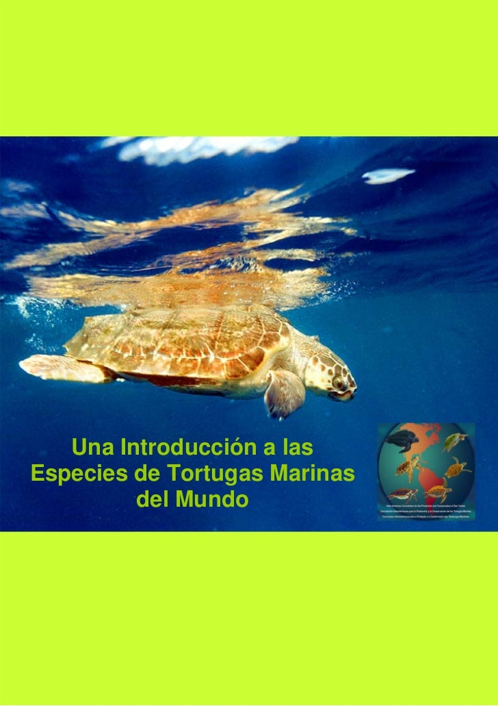 Una Introducción a lasEspecies de Tortugas Marinas         del Mundo