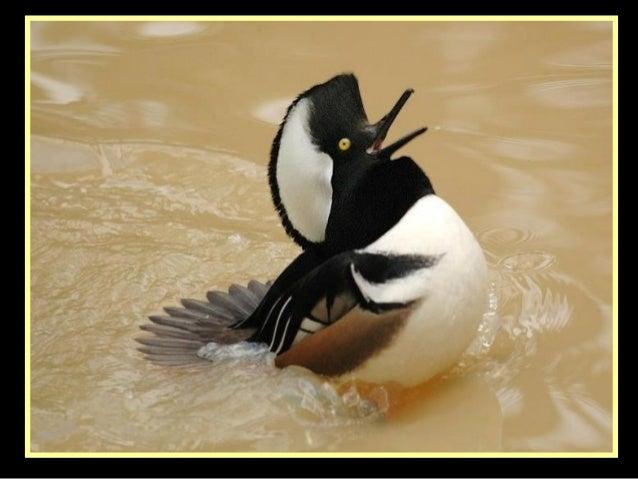 Source images : Internet compagnement musical : Le carnaval des animaux «Les oiseaux»