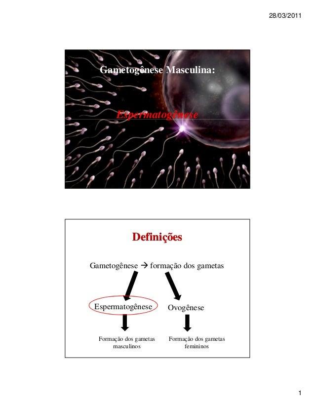 28/03/2011 1 Gametogênese Masculina: Espermatogênese Gametogênese  formação dos gametas Espermatogênese Ovogênese Formaçã...