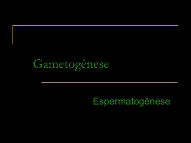 Gametogênese         Espermatogênese         Espermatogênese