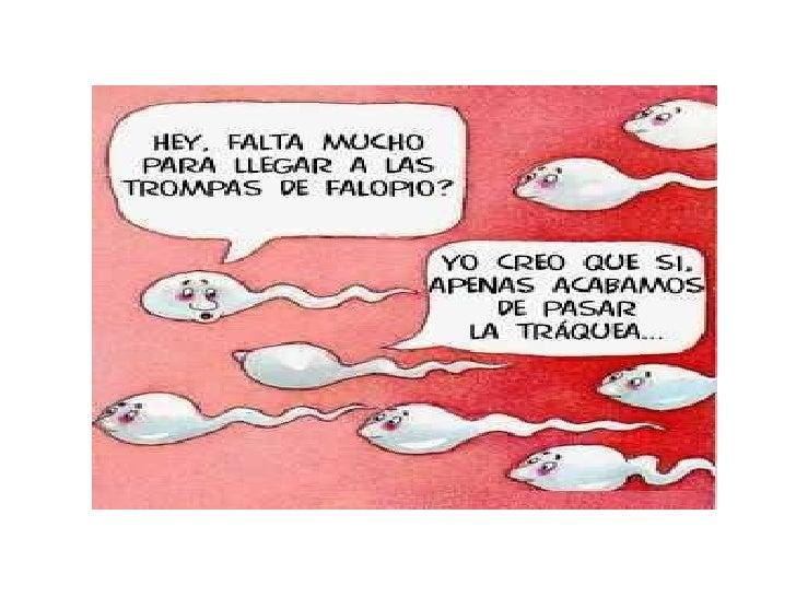 Espermatozoides Slide 3
