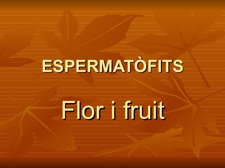 ESPERMATÒFITS Flor i fruit