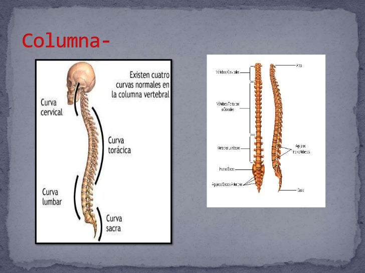 Espina Dorsal