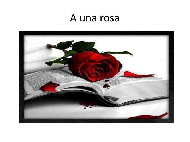 A una rosa