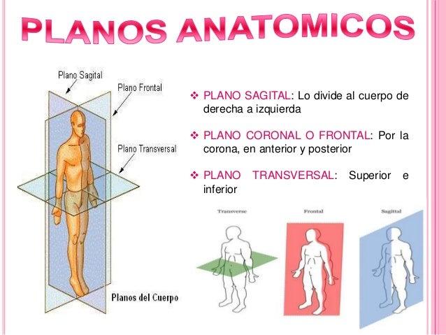 Espoch anatomia