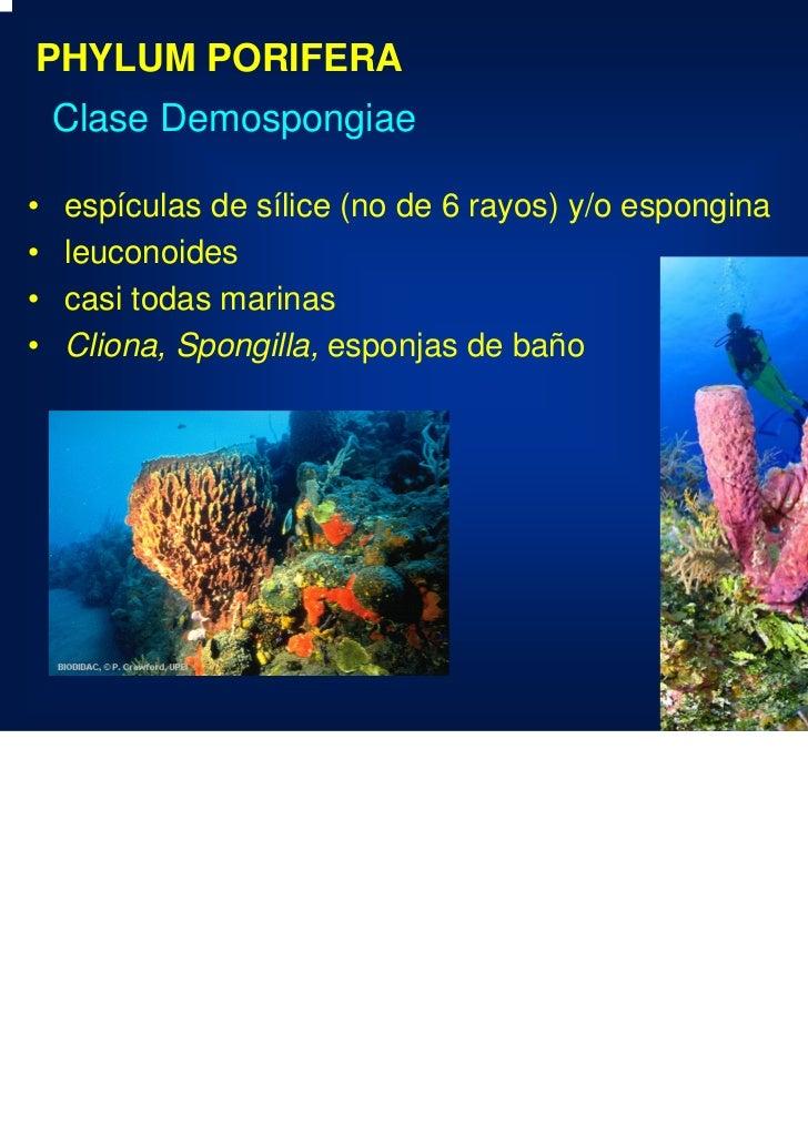 Esponjas Clase
