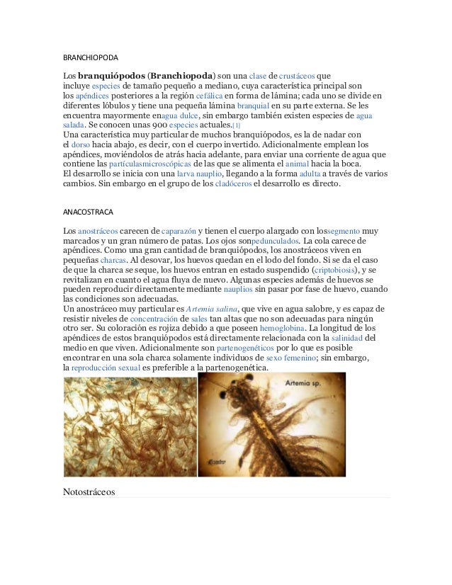 BRANCHIOPODALos branquiópodos (Branchiopoda) son una clase de crustáceos queincluye especies de tamaño pequeño a mediano, ...