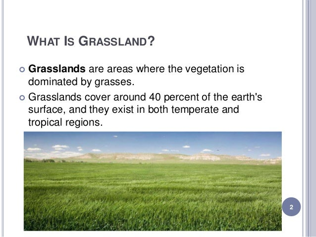 characteristics of the different types of grasslands The buffalo facts are really interesting which show their types habitat and diet the structure of these mammals can be seen from different buffalo pictures given here.