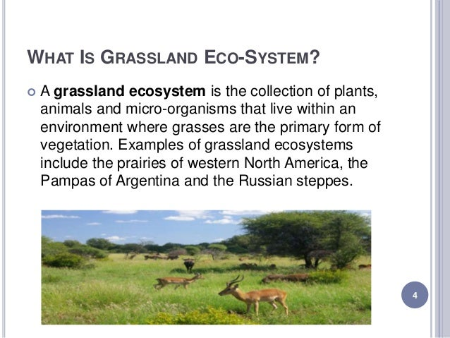 an analysis of the characteristics of the north american grassland In north america, many grasslands are considered endangered ecosystems for example.