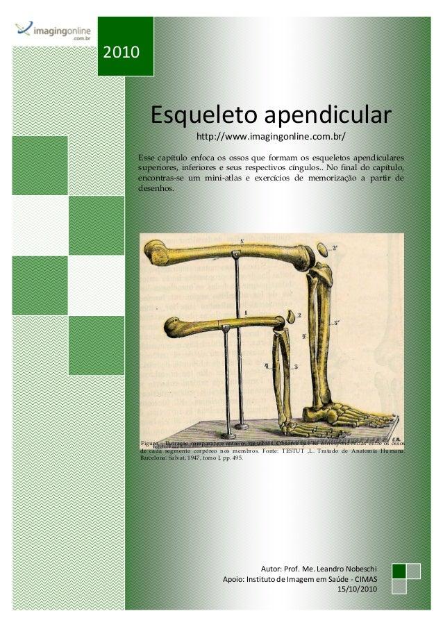 Esqueleto apendicular http://www.imagingonline.com.br/ Esse capítulo enfoca os ossos que formam os esqueletos apendiculare...