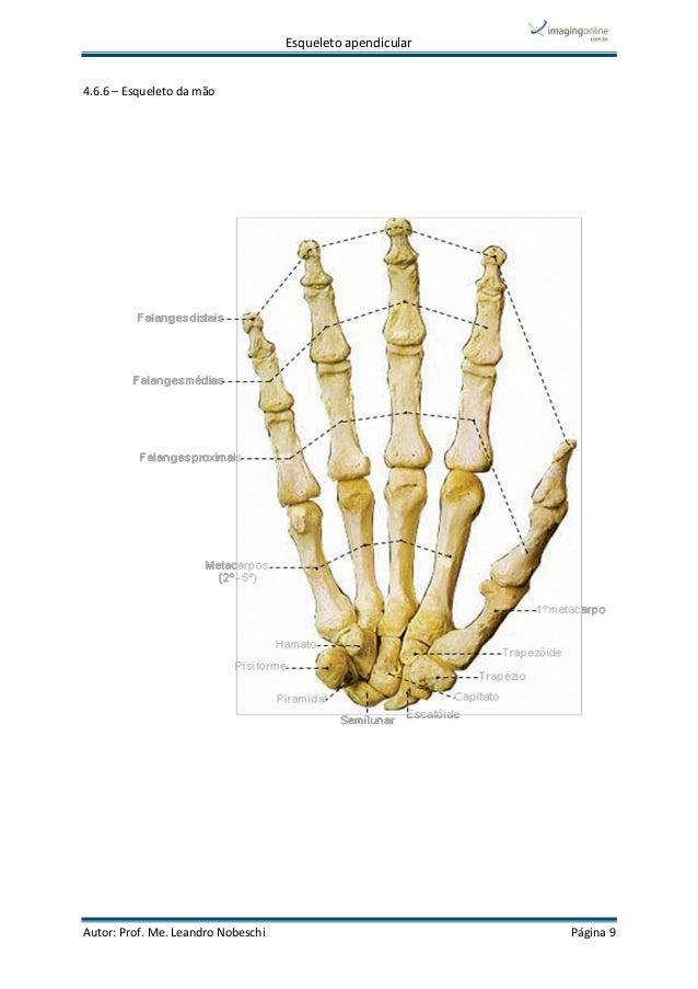 Único Esqueleto De La Anatomía Friso - Imágenes de Anatomía Humana ...