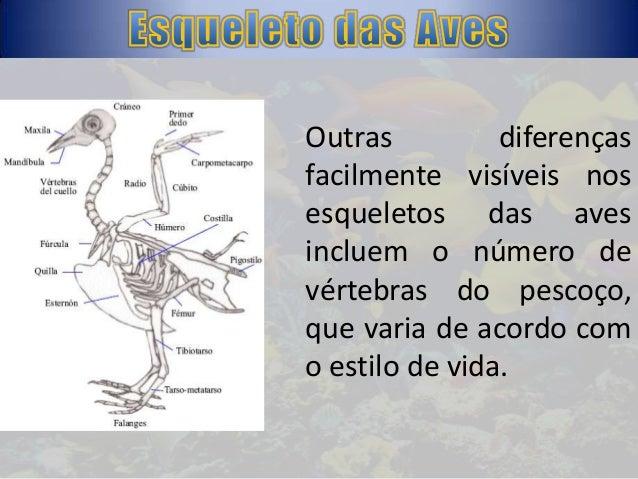 1) Crânio — protege o cérebro e pode ter um volume muito grande; 2) Coluna vertebral — eixo formado por peças articuladas ...