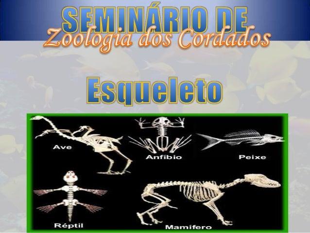 São vertebrados primitivos sem mandíbula e de esqueleto cartilaginoso. Peixes-bruxas da classe Myxine, tem crânio de carti...