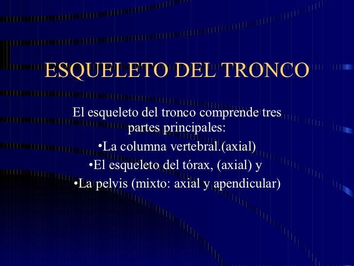 ESQUELETO DEL TRONCO <ul><li>El esqueleto del tronco comprende tres partes principales: </li></ul><ul><li>La columna verte...