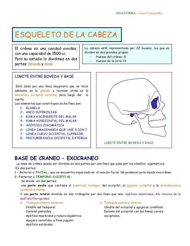 Esqueleto de la cabeza