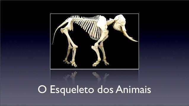 O Esqueleto dos Animais